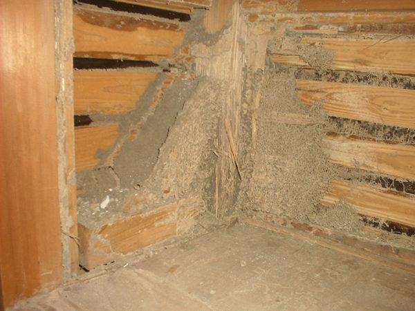 押入れ壁巣